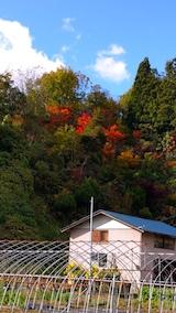 20161027山からの帰り道の様子紅葉