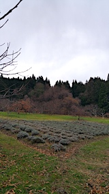 20161202ラベンダーの畑