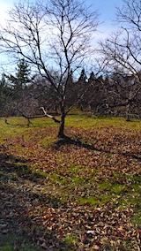 20161204山の様子栗の畑