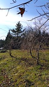 20161204山の様子八重紅枝垂れ桜のある斜面