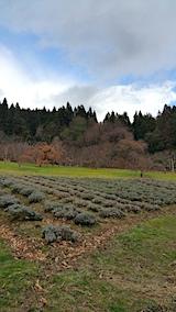20161205ラベンダーの畑