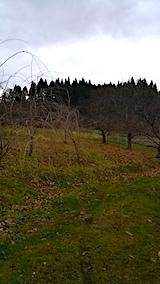 20161206山の様子八重紅枝垂れ桜のある斜面
