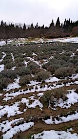 20161207ラベンダーの畑2