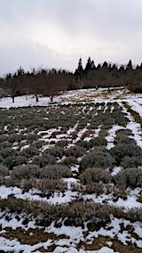 20161207ラベンダーの畑3