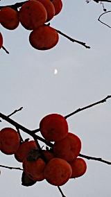 20161207山の様子柿とお月さま