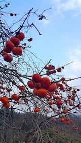 20161214柿の実