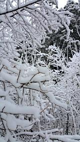 20170110山の様子雪景色1