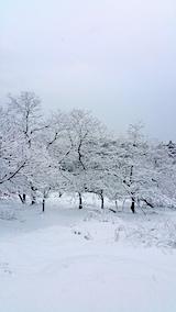 20170110山の様子雪景色3