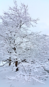 20170110山の様子雪景色4