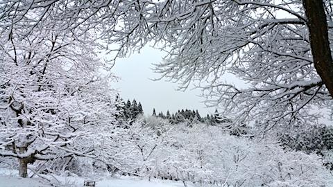 20170110山の様子雪景色6