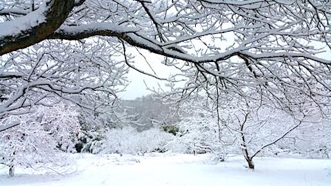 20170110山の様子雪景色7
