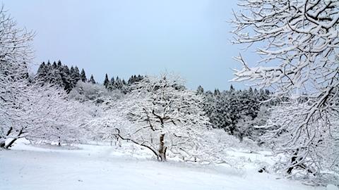 20170110山の様子雪景色8