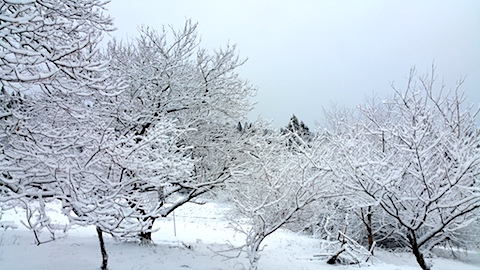 20170110山の様子雪景色9