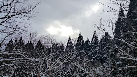 20170112山の様子栗の畑2