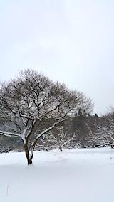 20170112山の様子花梅の木