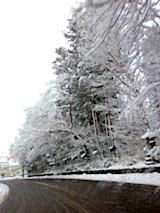 20170112会津の様子伊佐須美神社の杜