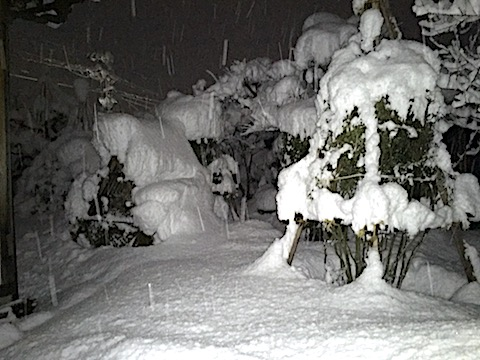 20170113大雪の会津未明