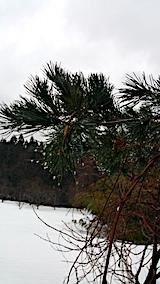 20170217山の様子雨模様1