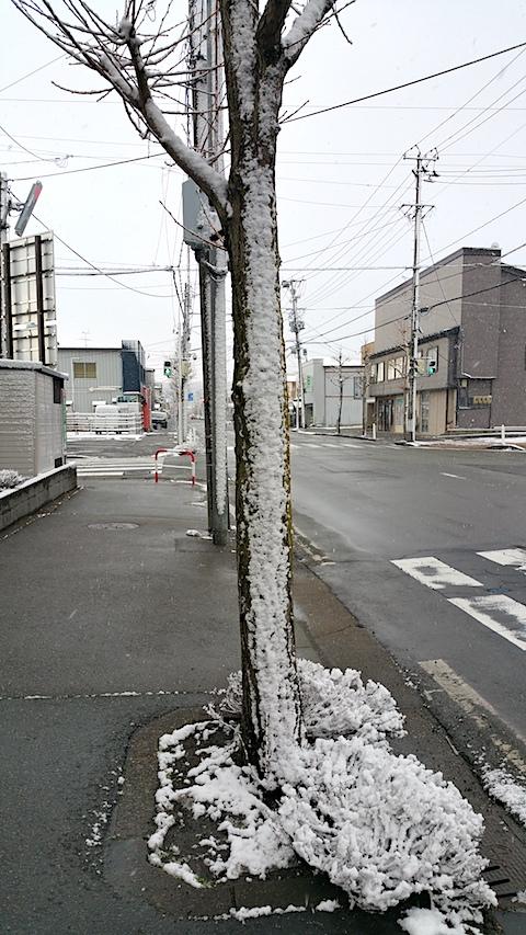 20170324外の様子朝うっすらと雪が7