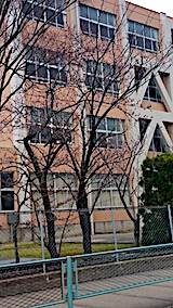 20170416山から帰り道の様子中学校前の桜も開花済み