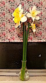 20170416スイセンの花