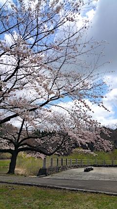 20170422一つ森公園の桜2