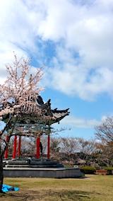 20170422一つ森公園の桜5