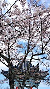20170422一つ森公園の桜6