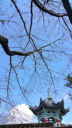 20170422一つ森公園の桜10