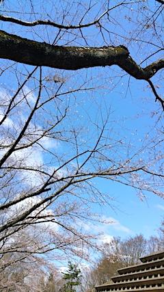 20170422一つ森公園の桜11