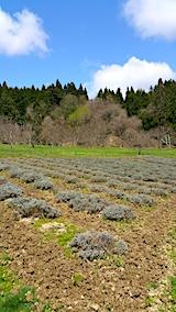 20170422ラベンダーの畑