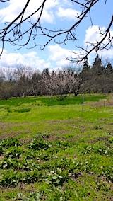 20170422山の様子ひろっこと梅の木