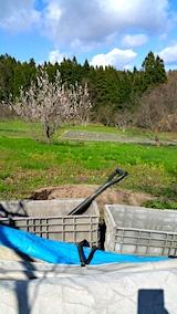 20170423堆肥を運ぶ