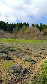 20170423ラベンダーの畑