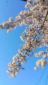 20170424外の様子桜2
