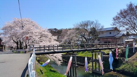 20170424太平川沿いの桜桜大橋5