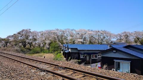 20170424太平川沿いの桜羽越線