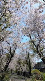 20170424太平川沿いの桜宮田散策路1