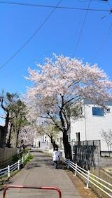 20170424太平川沿いの桜宮田散策路2