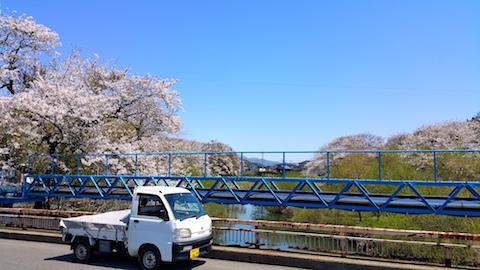20170424太平川沿いの桜百石橋1