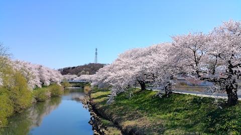 20170424太平川沿いの桜愛宕下橋8