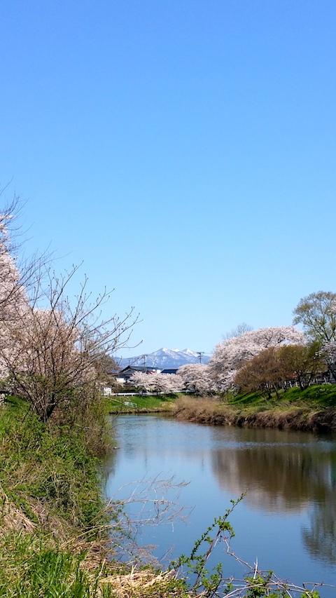 20170424太平川沿いの桜楢山5
