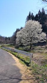 20170424山へ向かう途中の様子峠道