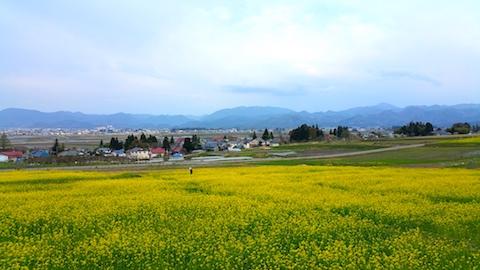 20170429会津美里町八木沢菜の花畑2