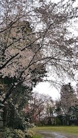 20170429会津美里町高天ヶ原桜