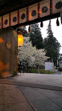 20170429会津美里町伊佐須美神社薄墨桜1