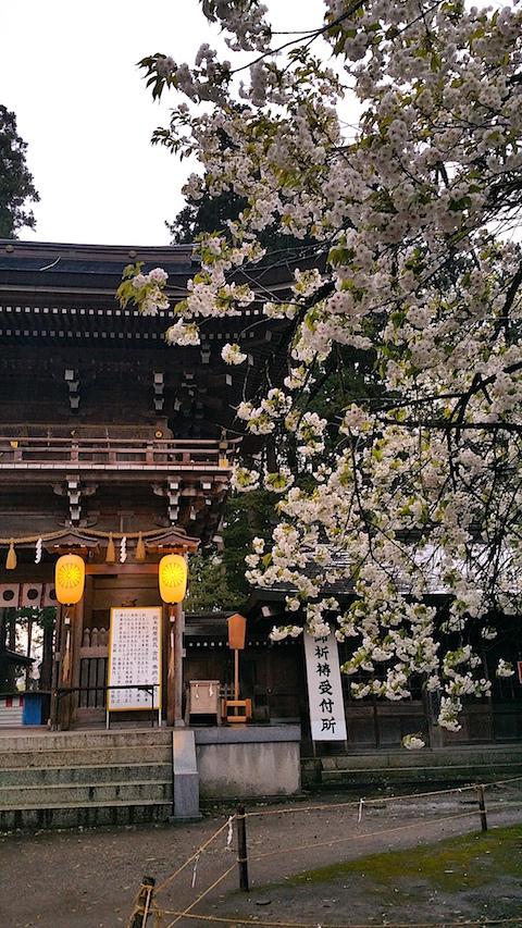 20170429会津美里町伊佐須美神社薄墨桜5