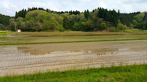 20170512山へ向かう途中の様子今季初めて田植え始まる3
