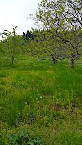 20170512今季初めての草刈り前の様子2