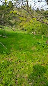 20170512今季初めての草刈り前の様子3